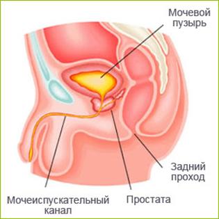 Глубокий глотка и сперма